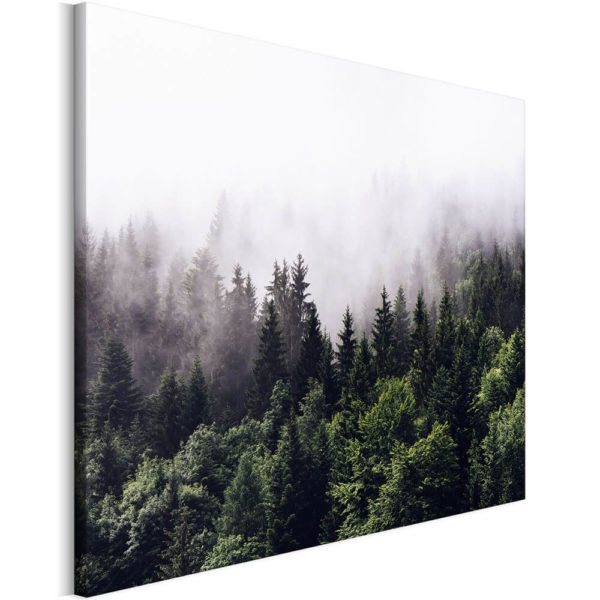 forest_in_fog_okladka